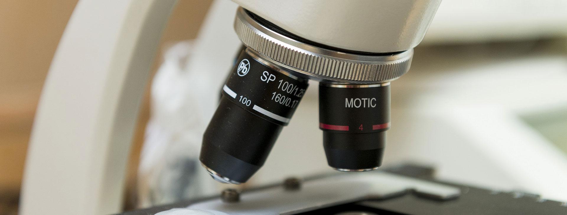microscopio clínica veterinaria A Cuatro Patas