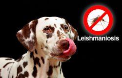 campaña-leishmaniosis-2017